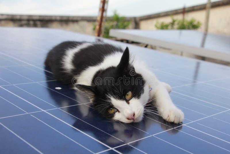 Gatinho preto e branco que encontra-se no painel solar do agregado familiar no aberto-ro imagem de stock