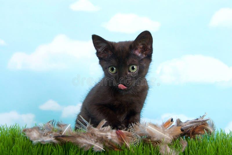 Gatinho preto que lambe penas de pássaro dos bordos na grama imagem de stock royalty free
