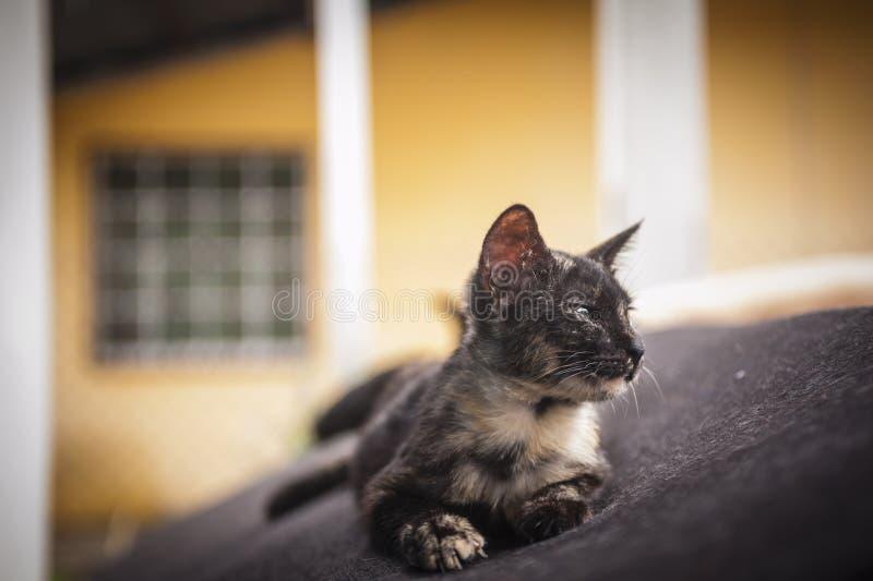Gatinho que descansa no sofá velho fotografia de stock