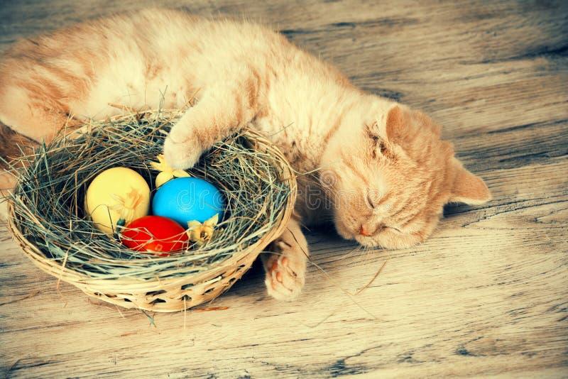 Gatinho que dorme na cesta com ovos coloridos fotografia de stock royalty free