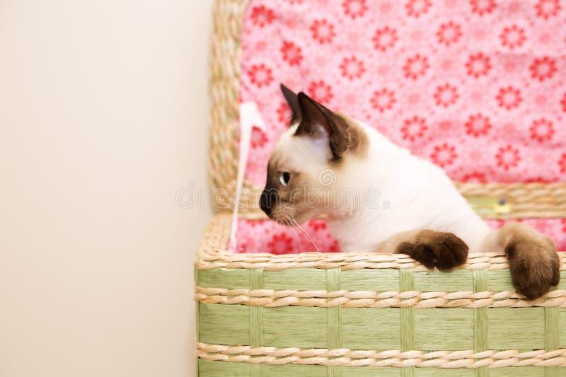 Gatinho que olha fora da cesta fotografia de stock