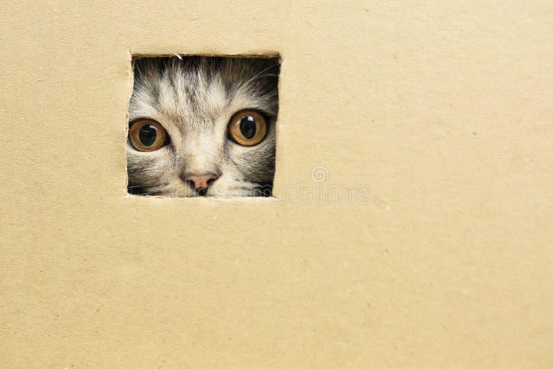 gatinho que senta-se em uma caixa de cartão, olhares através de um furo imagem de stock