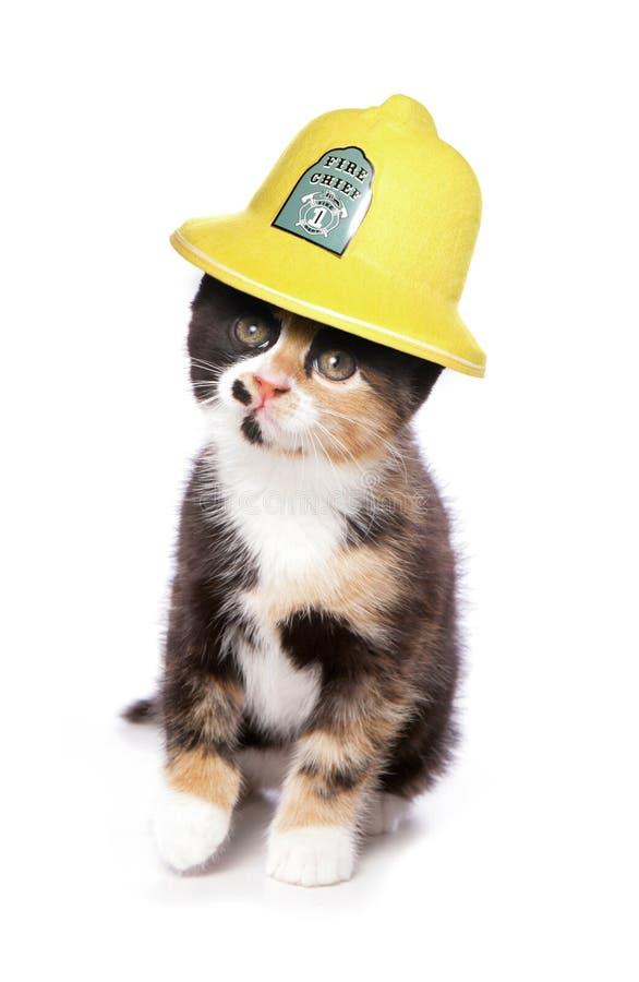 Gatinho que veste um estúdio do capacete dos firemans imagem de stock