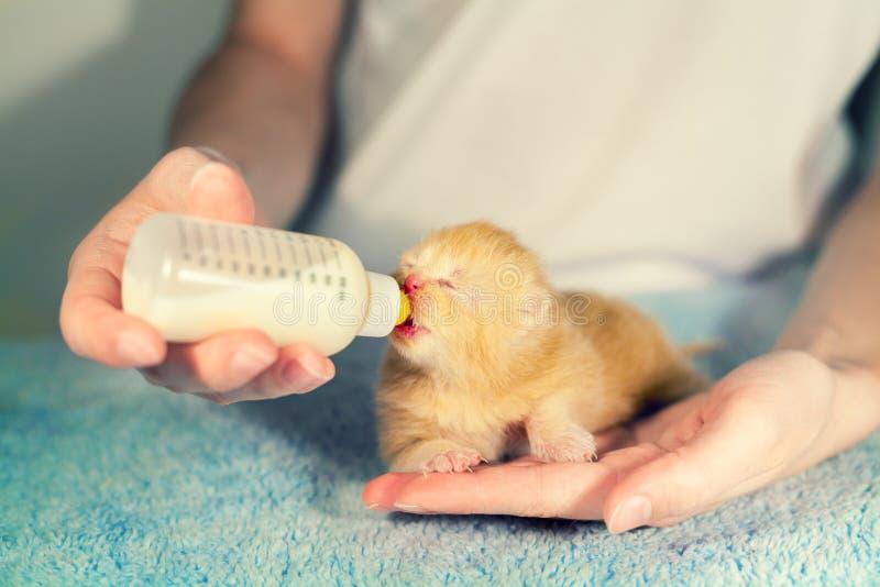 Gatinho recém-nascido pequeno de alimentação com replacer de leite imagem de stock royalty free