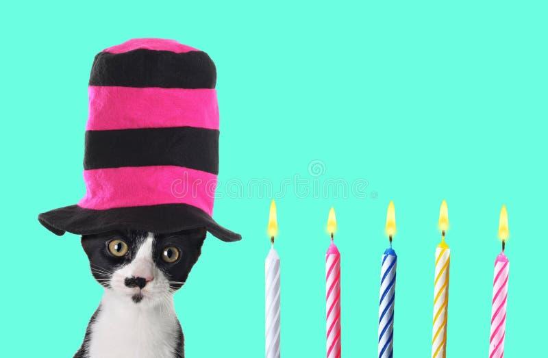 Gatinho retro engraçado do aniversário com chapéu alto colorido fotografia de stock royalty free