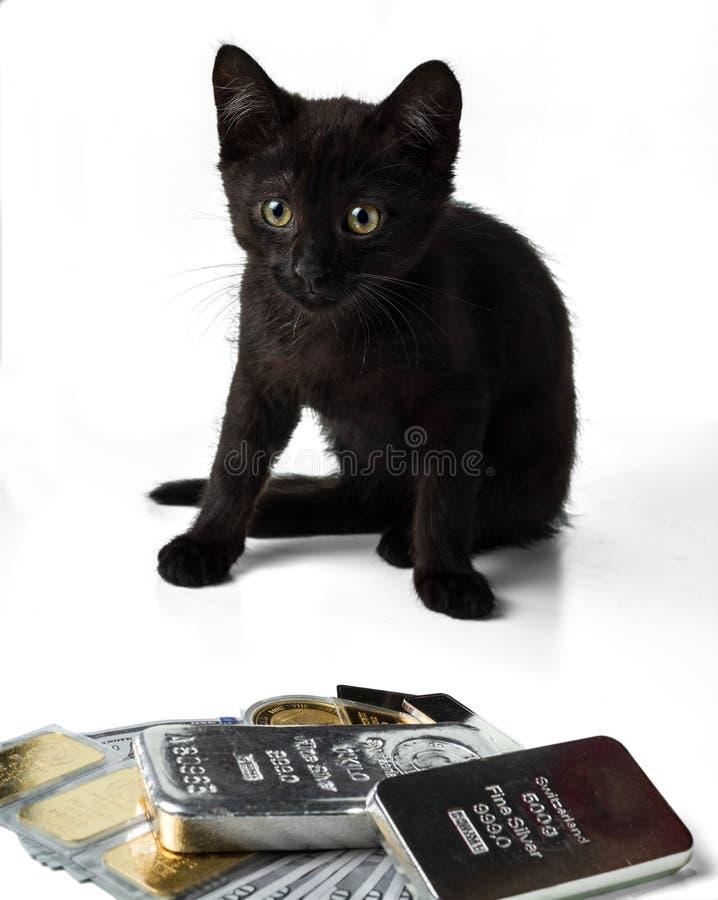 Gatinho rico Um gatinho preto senta-se perto do ouro e as barras de prata e as moedas e os dólares do dinheiro imagem de stock royalty free