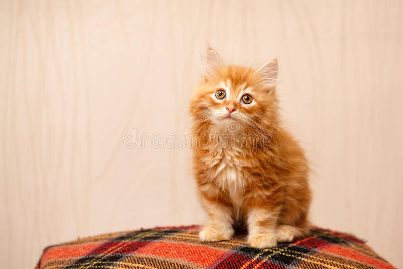 Gatinho vermelho bonito que senta-se em uma manta fotografia de stock
