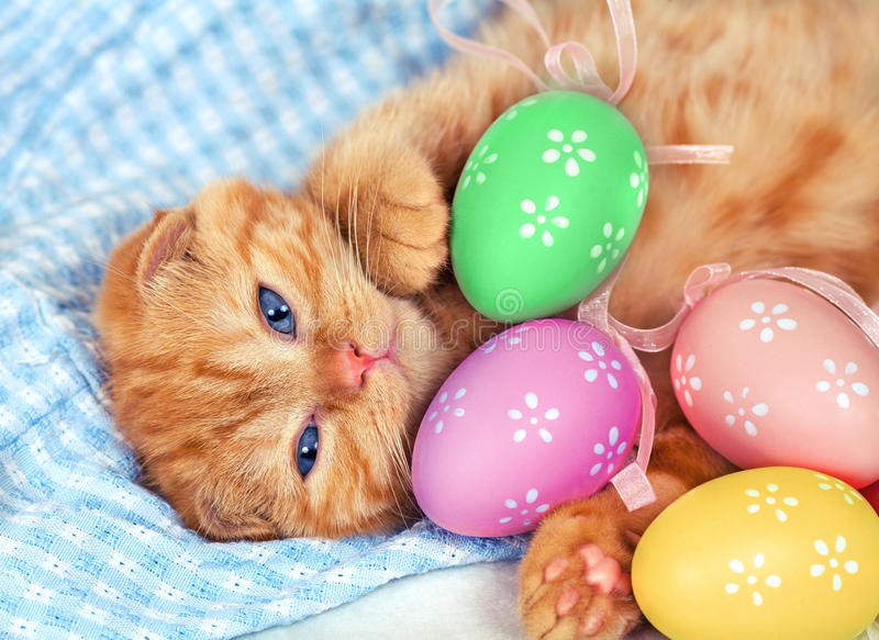 Gatinho vermelho com os ovos coloridos Páscoa fotos de stock