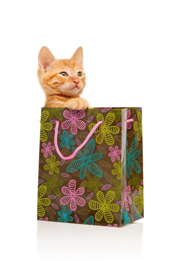 Gatinho vermelho pequeno seriamente glamoroso que senta-se no saco de compras verde, cor-de-rosa e azul florescido foto de stock
