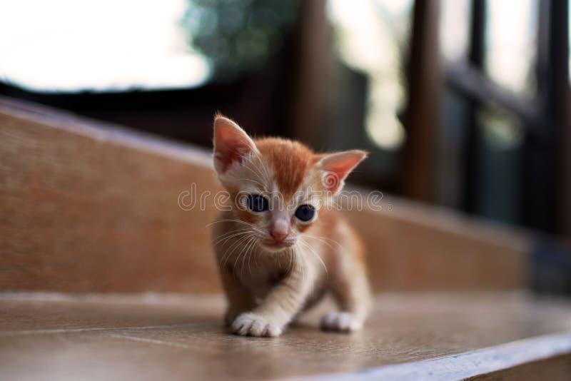 Gatinho vermelho recém-nascido Gato recém-nascido do bebê Foto bonito do fim do gato do bebê A vaquinha bonita quer a mamã, quer  fotos de stock
