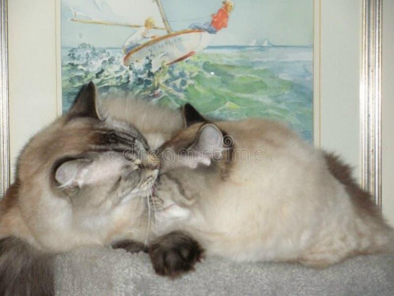 Gatinhos apaixonado fotos de stock