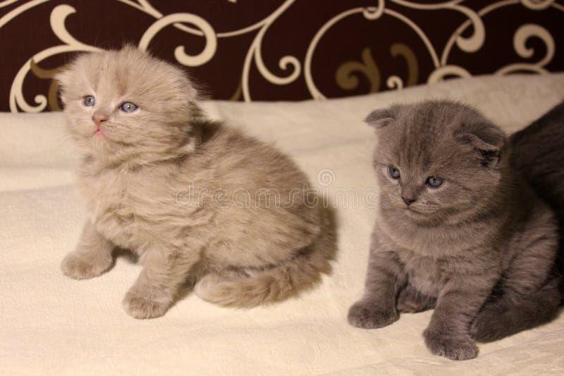 Gatinhos bonitos no sofá fotografia de stock