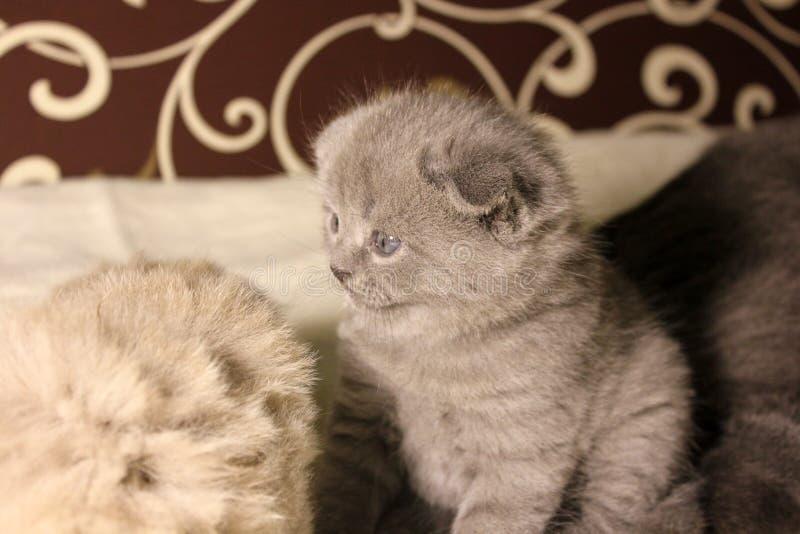 Gatinhos bonitos no sof? imagens de stock royalty free
