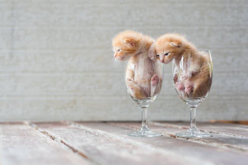 Gatinhos bonitos no vidro de vinho com fundo textured imagens de stock