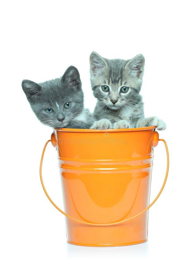 Gatinhos cinzentos em uma cubeta imagem de stock