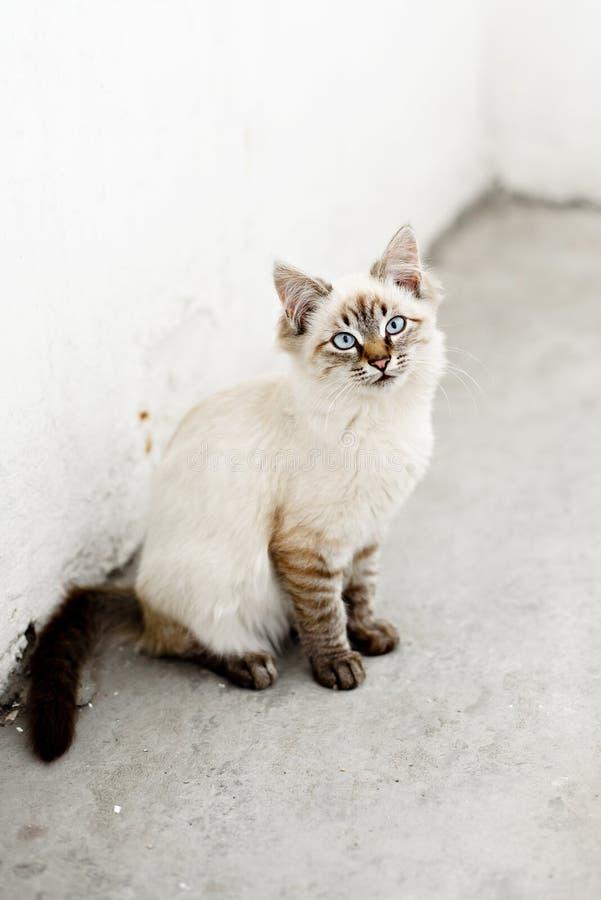Gatinhos desabrigados bonitos que olham a câmera e o jogo foto de stock royalty free