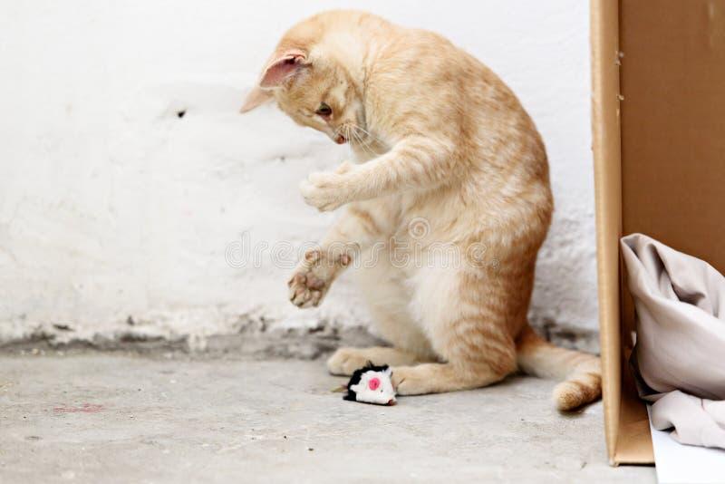Gatinhos desabrigados bonitos que olham a câmera e o jogo fotografia de stock royalty free