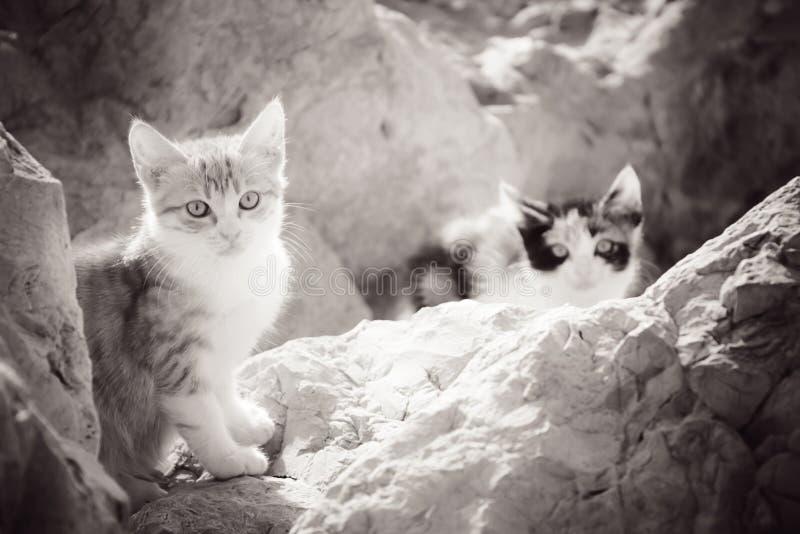 Gatinhos desabrigados pequenos nas rochas pelo mar fotografia de stock