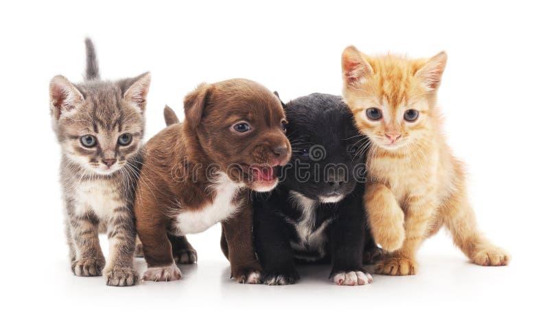Gatinhos e filhotes de cachorro fotografia de stock royalty free