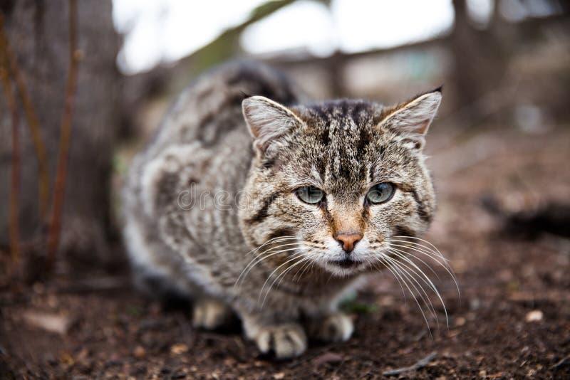 Gatinhos e opinião do gato o animal foto de stock