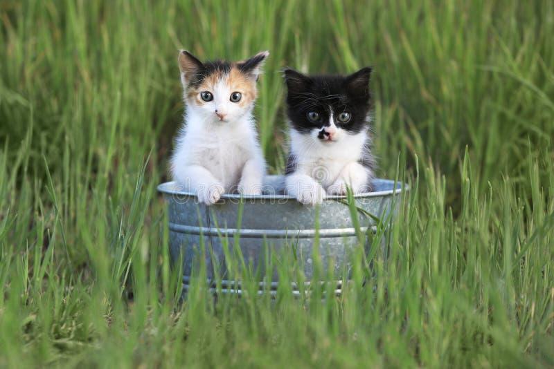Gatinhos fora na grama verde alta fotografia de stock