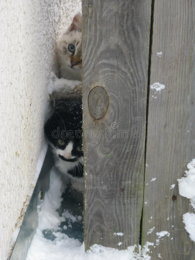 Gatinhos macios desabrigados pequenos, branco e preto imagens de stock