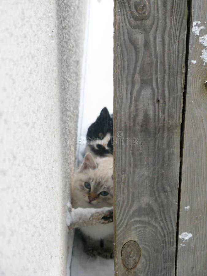 Gatinhos macios desabrigados pequenos, branco e preto imagem de stock royalty free