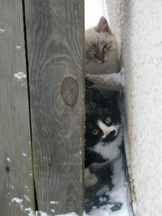 Gatinhos macios desabrigados pequenos, branco e preto fotos de stock