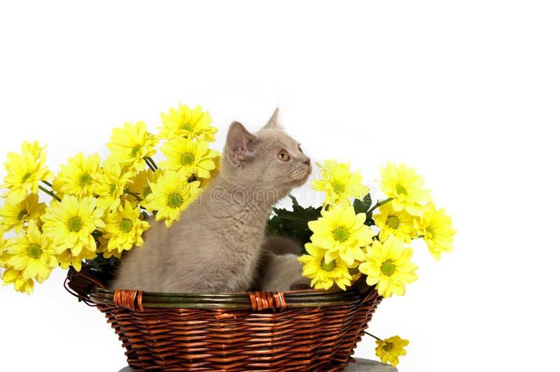 Gatinhos na cesta com flores amarelas imagens de stock royalty free