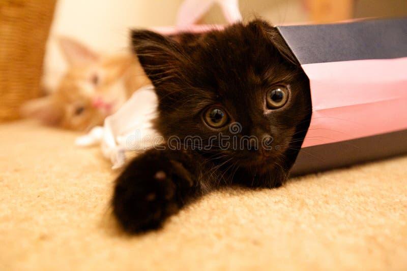 Gatinhos no saco de compras fotografia de stock
