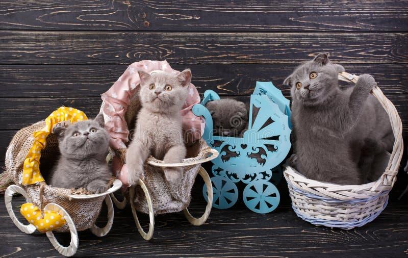 Gatinhos numa cesta e carruagens decorativas imagem de stock
