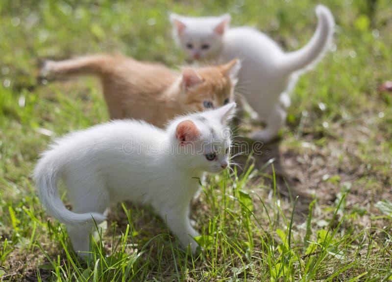 Gatinhos pequenos bonitos fotos de stock