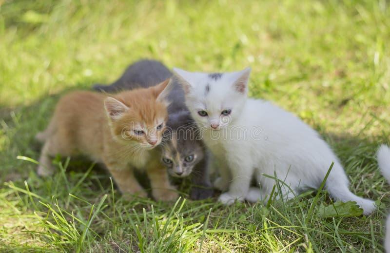Gatinhos pequenos bonitos foto de stock