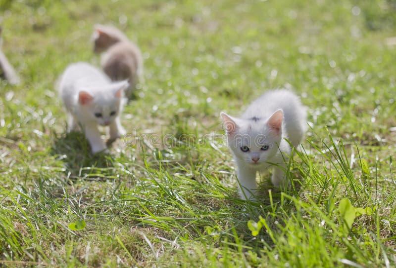Gatinhos pequenos bonitos imagem de stock