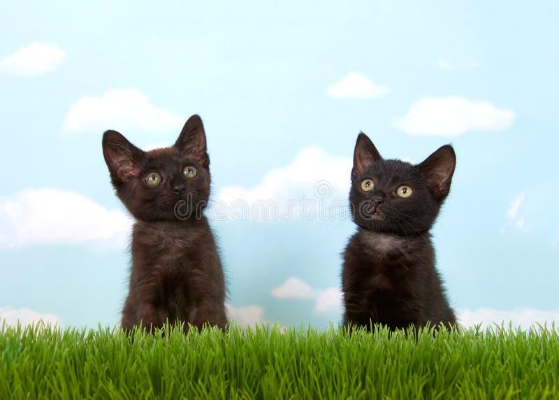 Gatinhos pretos que sentam-se na grama que olha acima fotografia de stock royalty free