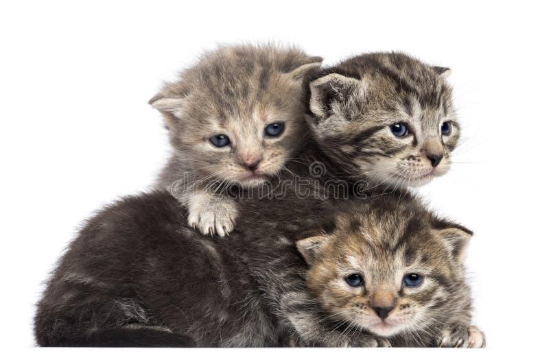 Gatinhos que encontram-se em se fotos de stock royalty free