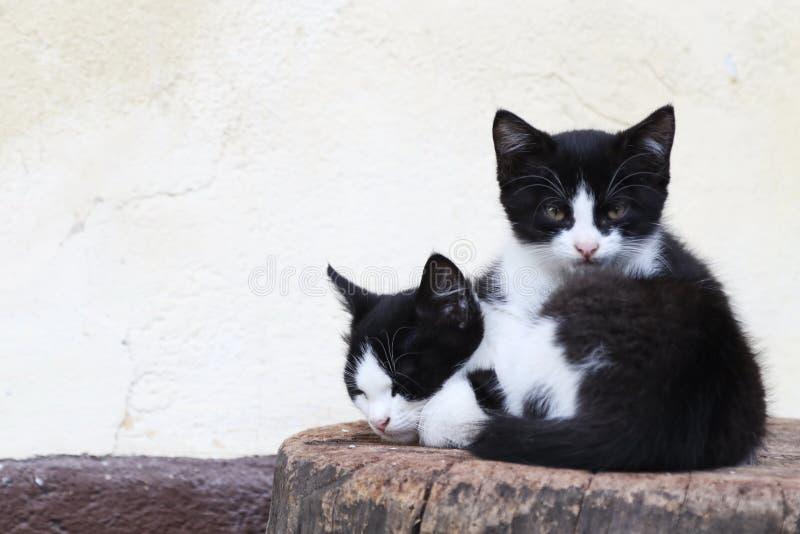 Gatinhos que encontram-se em um bloco de madeira em uma exploração agrícola em Bohinj, Eslovênia fotografia de stock royalty free