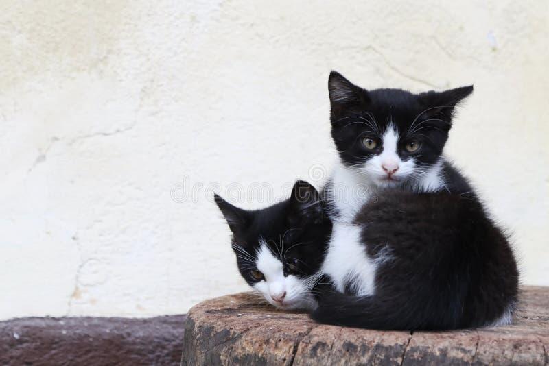 Gatinhos que encontram-se em um bloco de madeira em uma exploração agrícola em Bohinj, Eslovênia imagens de stock