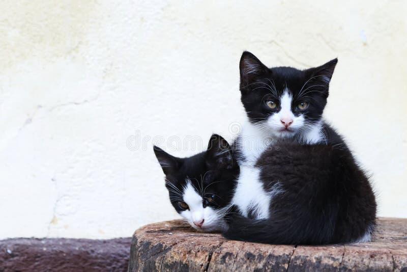 Gatinhos que encontram-se em um bloco de madeira em uma exploração agrícola em Bohinj, Eslovênia imagem de stock royalty free