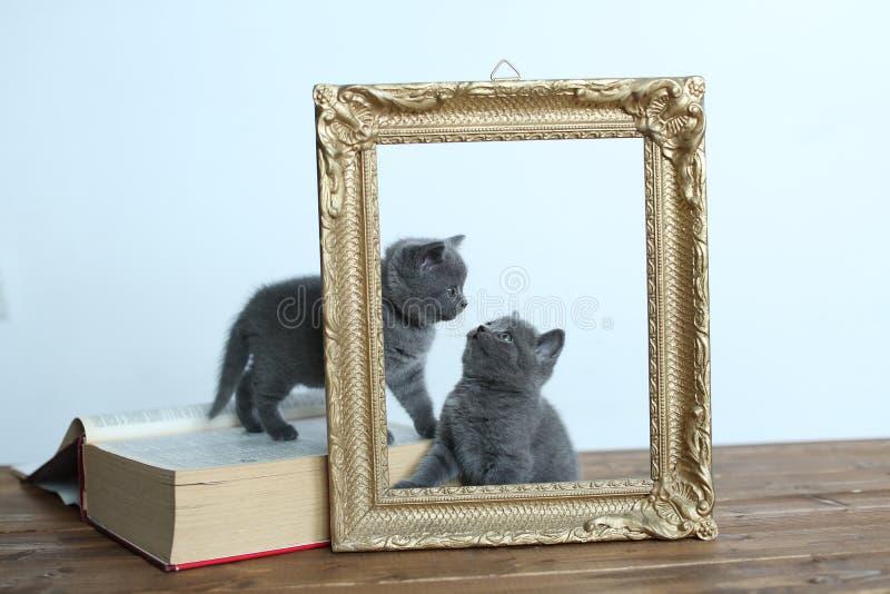 Gatinhos recentemente carregados no quadro de madeira fotografia de stock royalty free