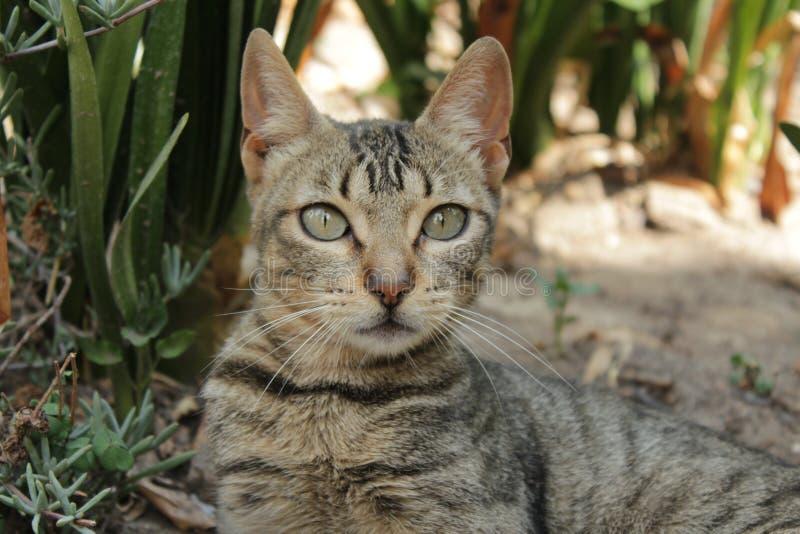 Download Gatito imagen de archivo. Imagen de gatito, hermoso - 100527349