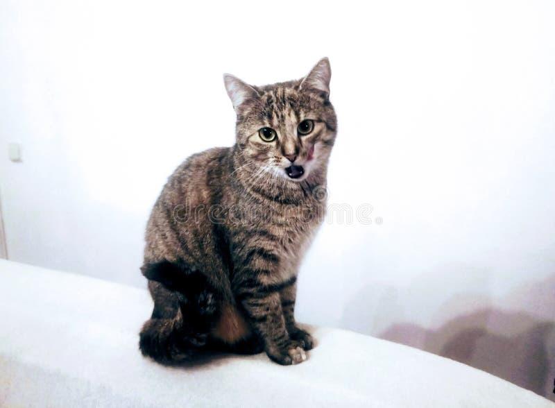 gatito imágenes de archivo libres de regalías