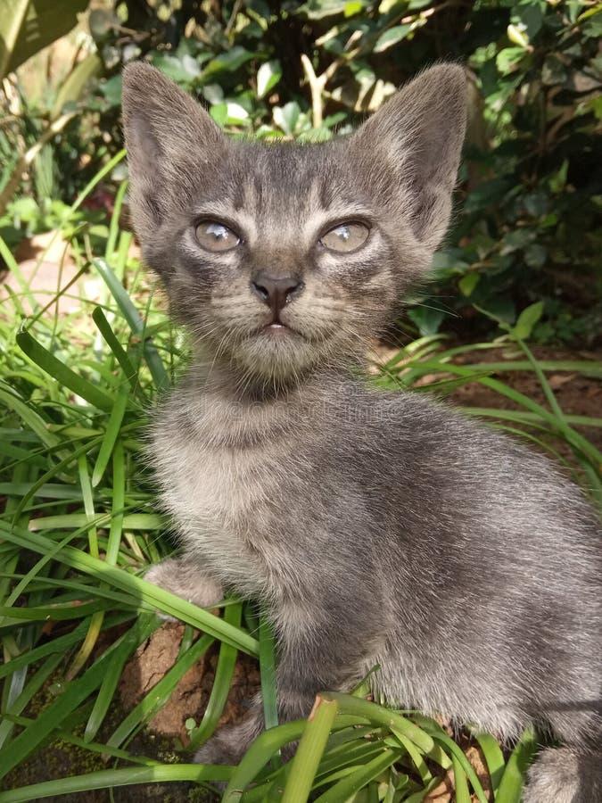 gatito fotografía de archivo