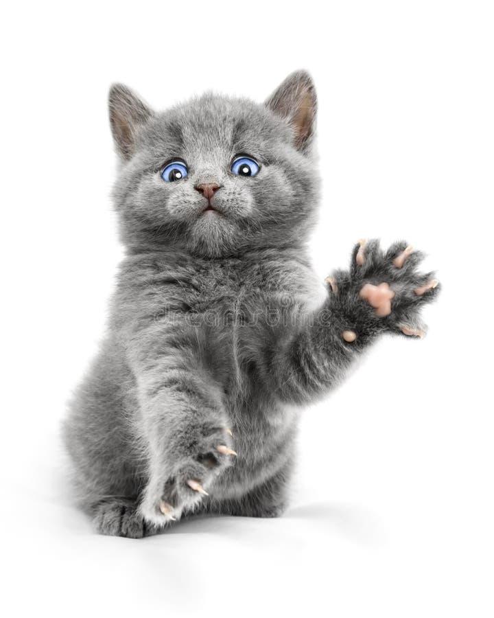 Download Gatito imagen de archivo. Imagen de griffin, gato, glowing - 41904167