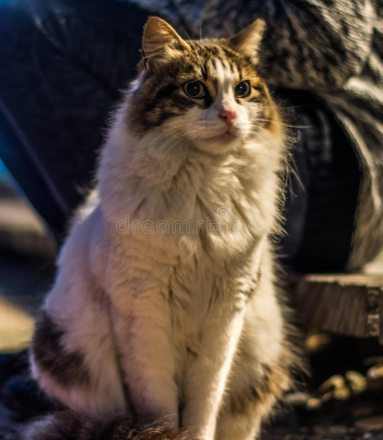 gatito imagen de archivo