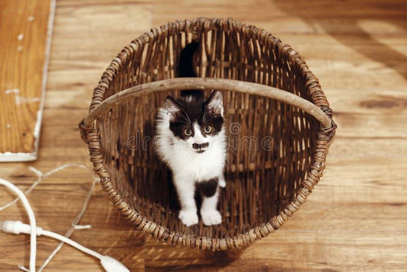 Gatito adorable que se sienta en cesta rústica Ki blanco y negro lindo imagen de archivo libre de regalías