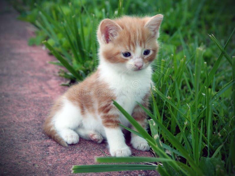 Gatito amarillo foto de archivo