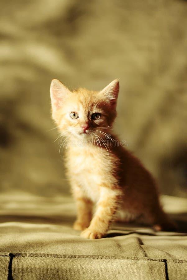 Gatito amarillo curioso imagenes de archivo