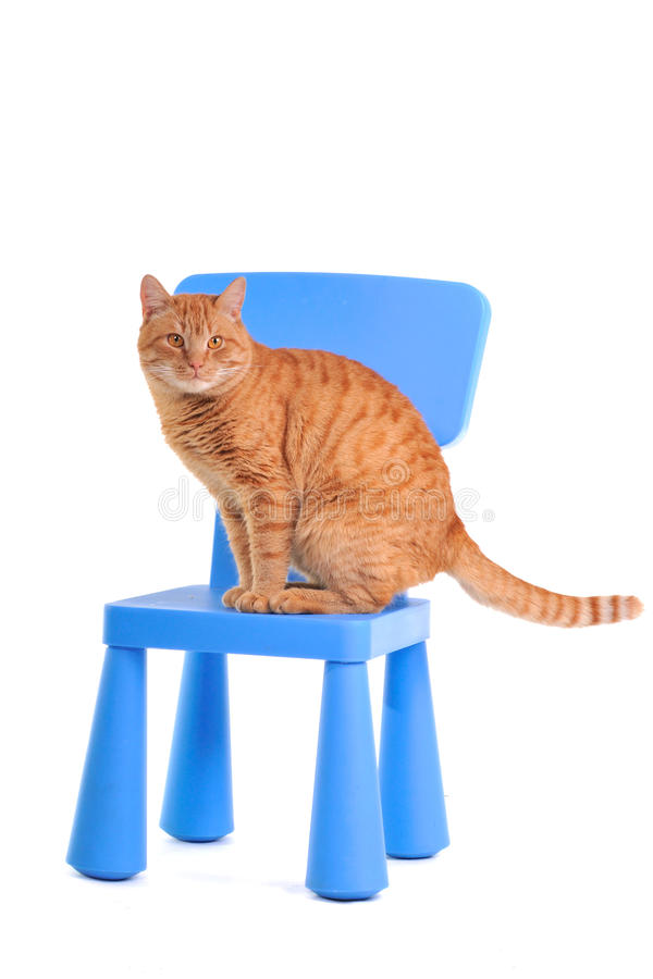Gatito amarillo en una silla azul fotos de archivo