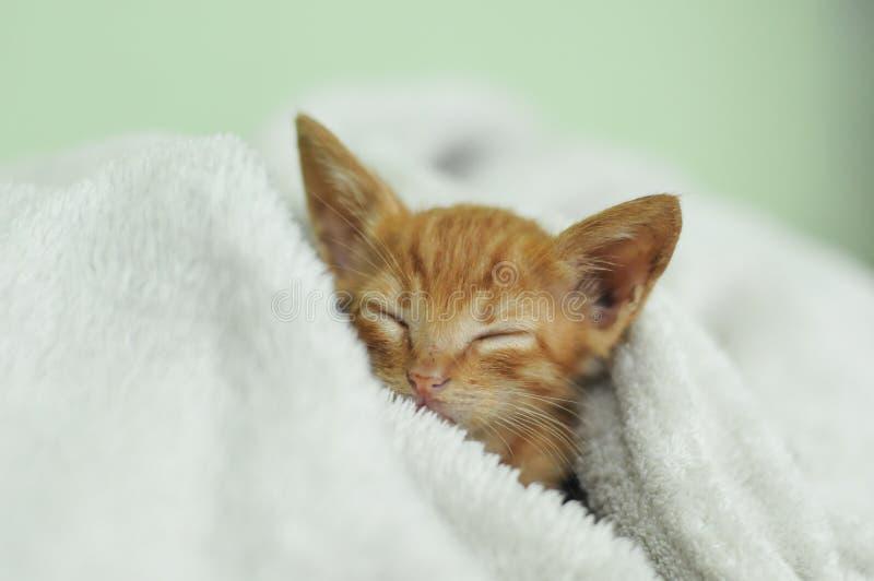 Gatito anaranjado el dormir en la manta blanca imagen de archivo libre de regalías